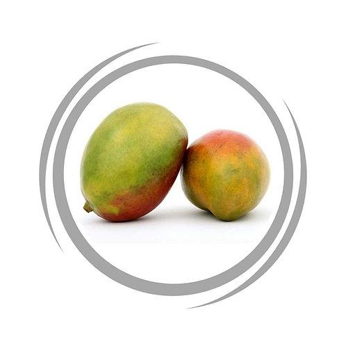 Glenn Mango tree