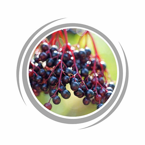 Elderberry delivered Perth