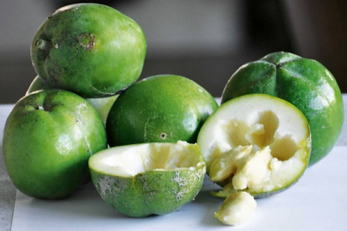 Aztec - White Sapote (Grafted)