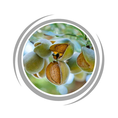 Almond Self pollinating tree delivered Perth