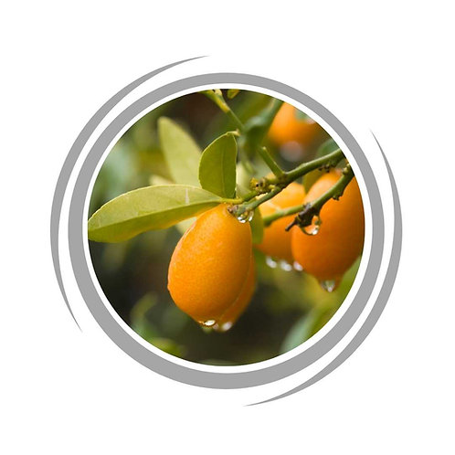 Cumquat Tree (Grafted)