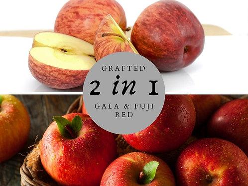 2 way Apple - Gala & Fuji Red