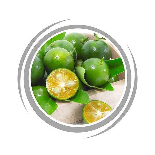 Calamansi / Calamondin Plant