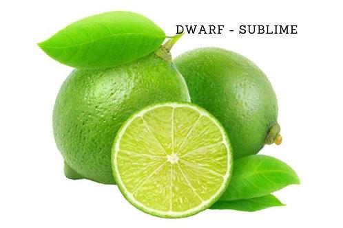 Sublime - Dwarf