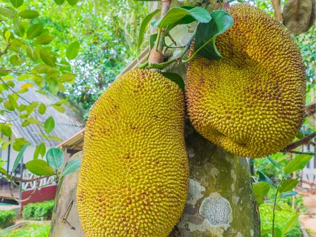 The Jewel Inside Jackfruit