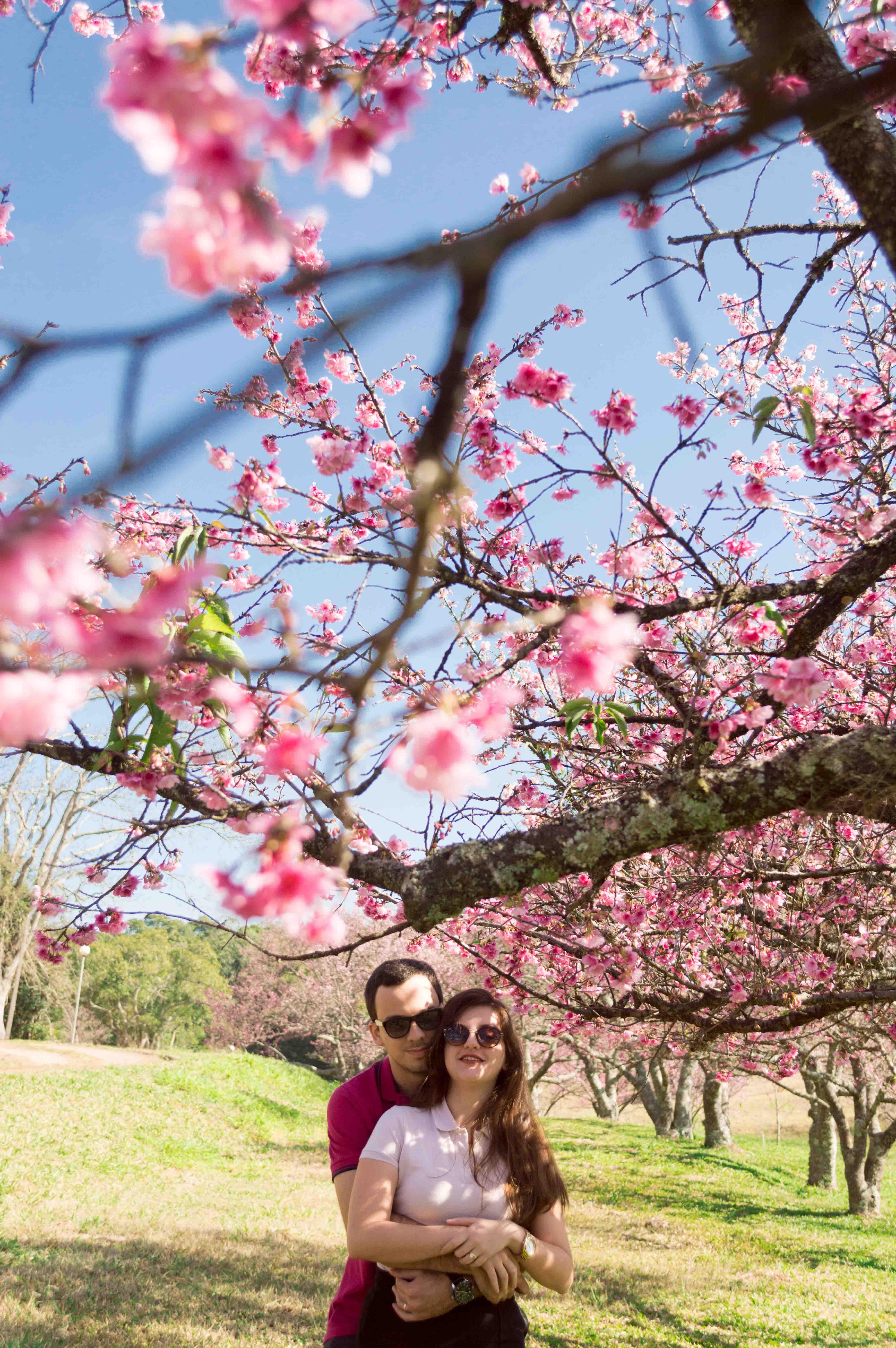 Cerejeiras-50