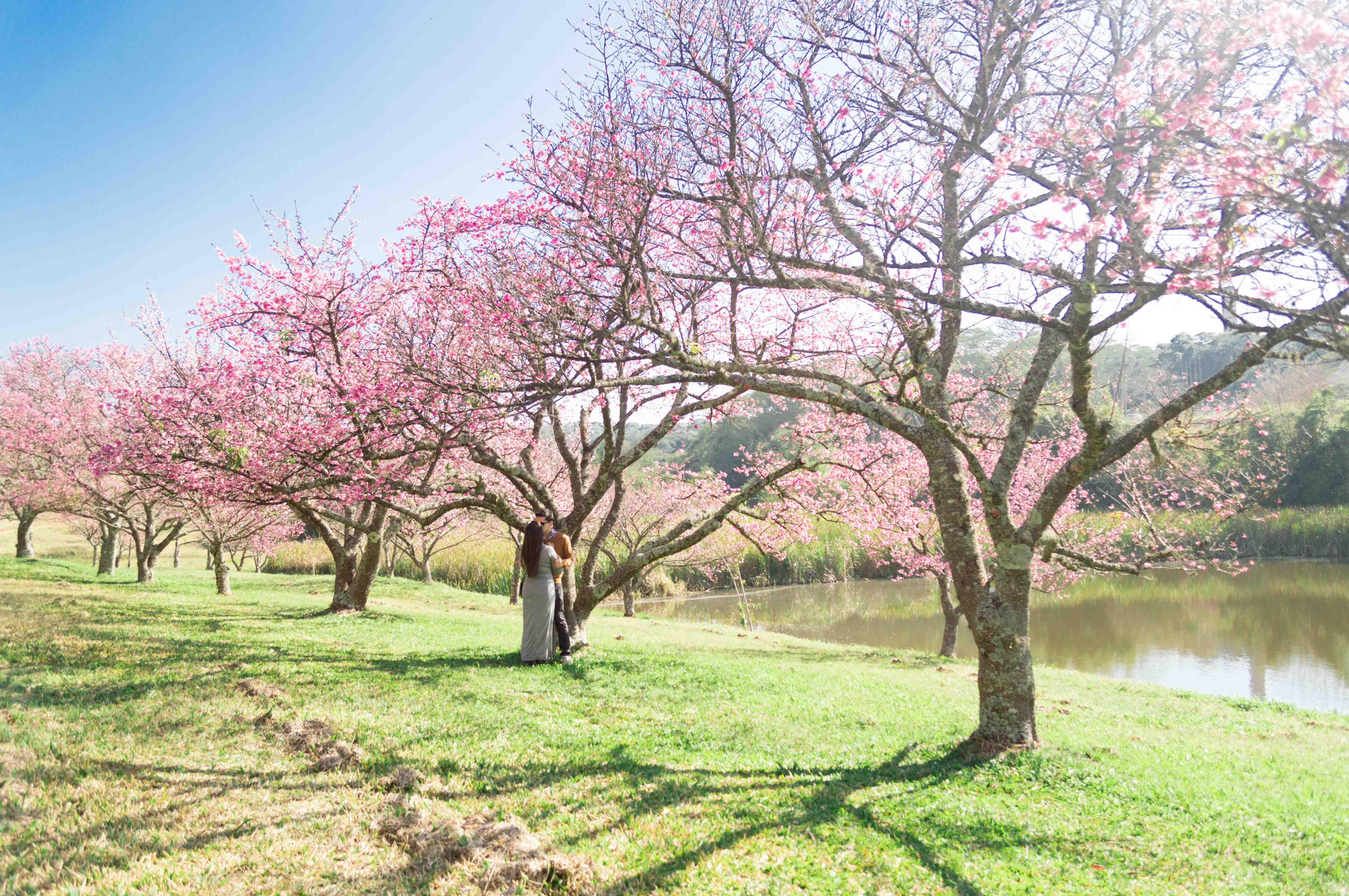 Cerejeiras-33