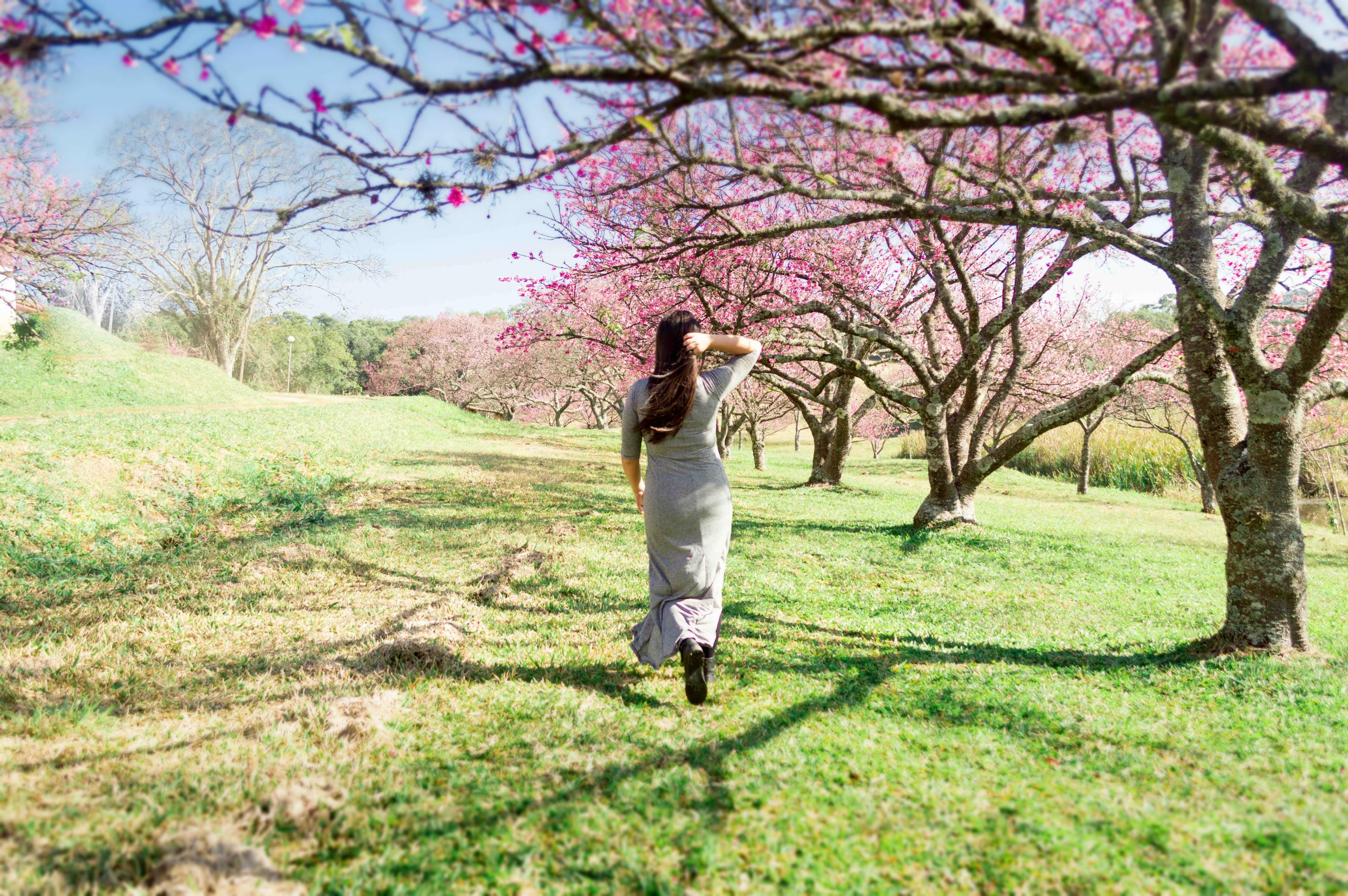 Cerejeiras-21_desfoque