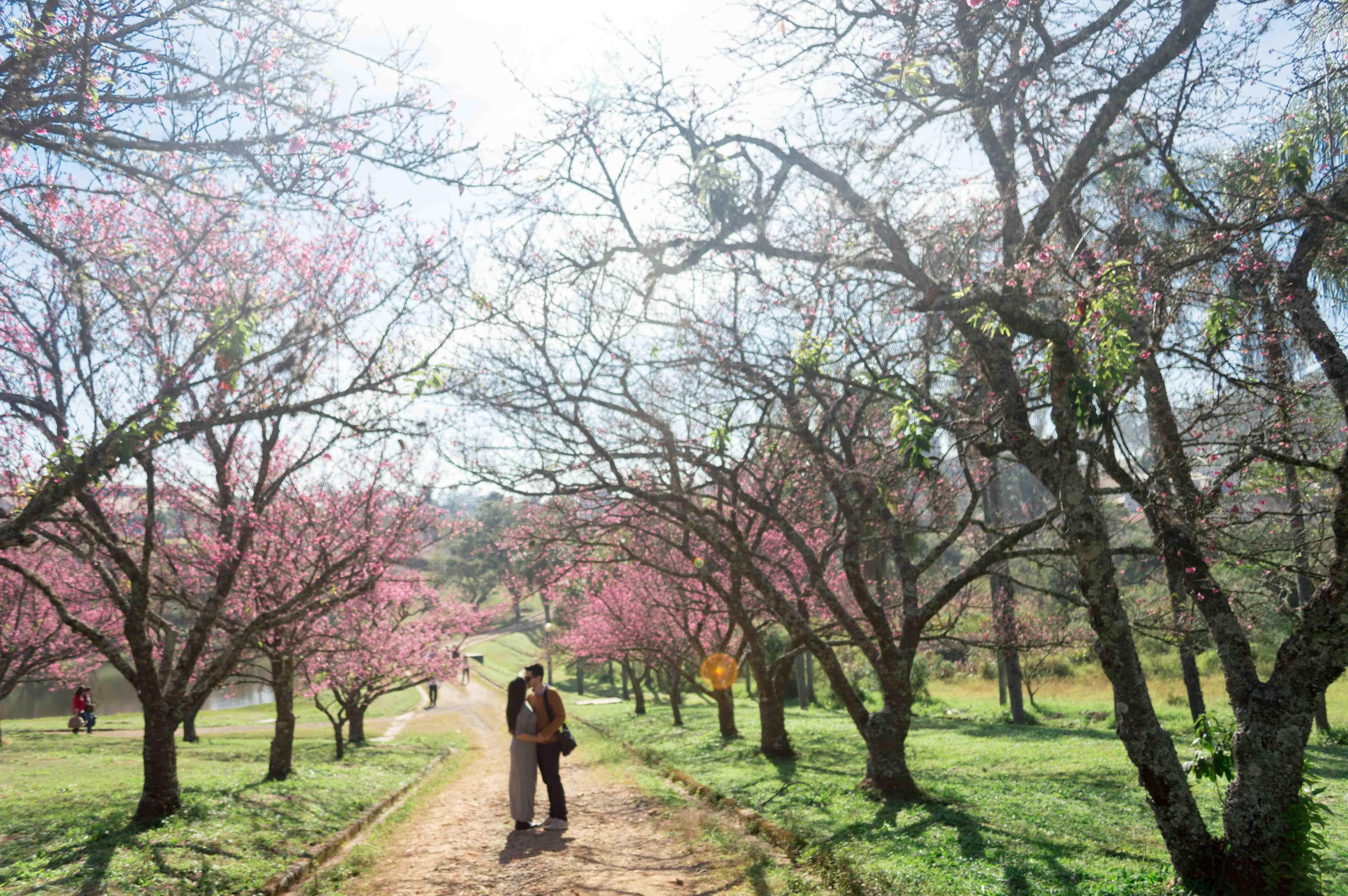 Cerejeiras-14