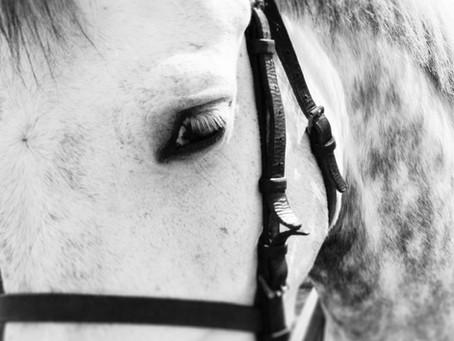 Cavalos Brancos...