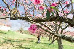 Cerejeiras-30