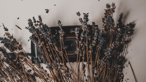 Dried Flowers: DIY & Gift Ideas