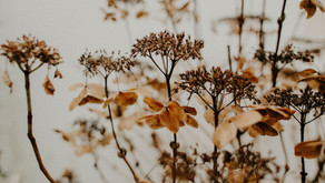 What To Do With Your Dried Flowers