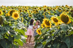 sunflower field the robinson family farm