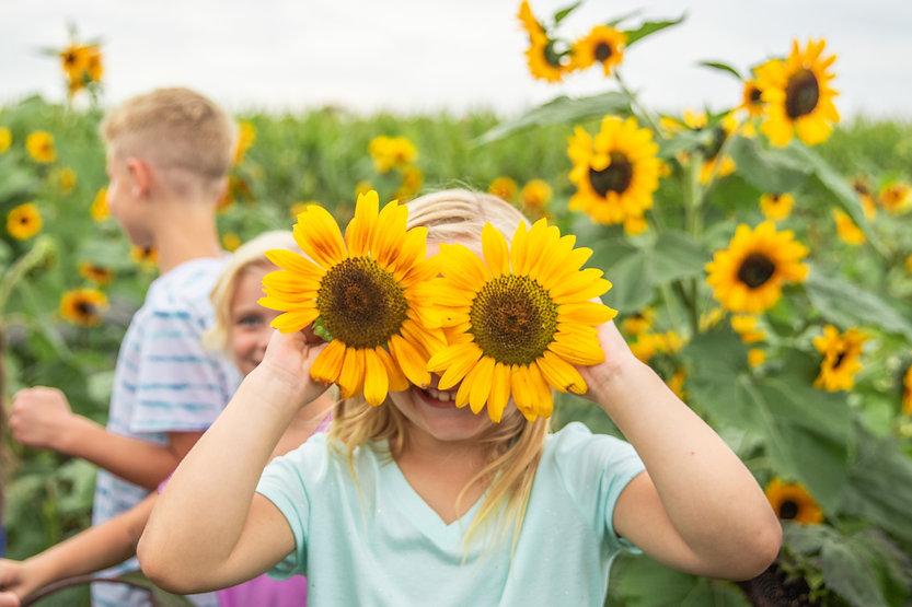SunflowerPictures.jpg