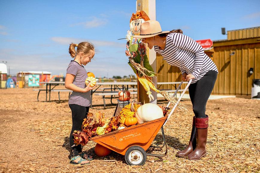 maxwells pumpkin wagon.jpg