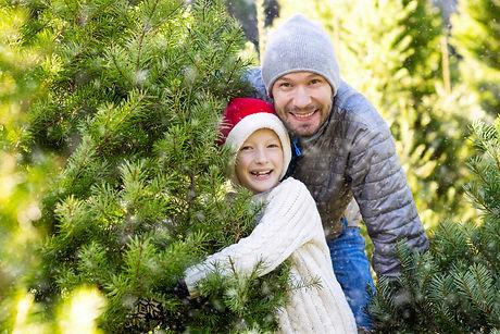 ChristmasTreesTempleTX.jpeg