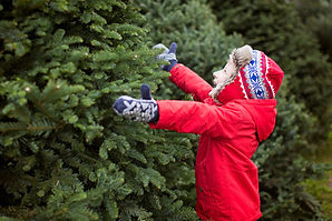 ChristmasTrees.jpeg