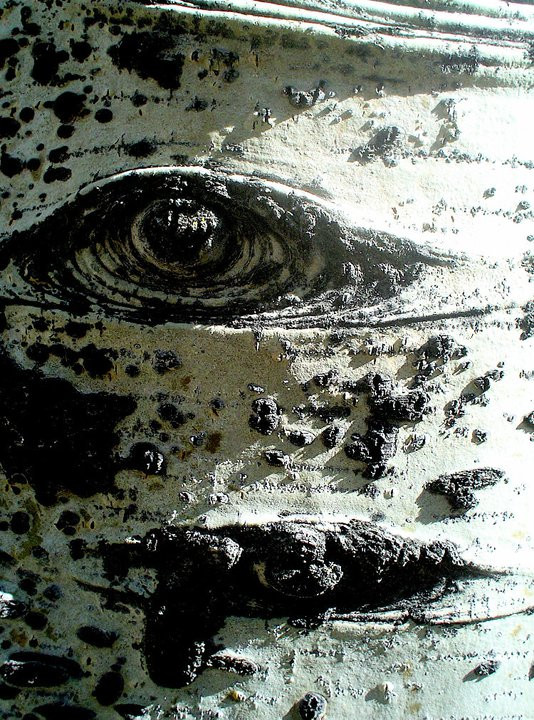 aspen eye.jpg