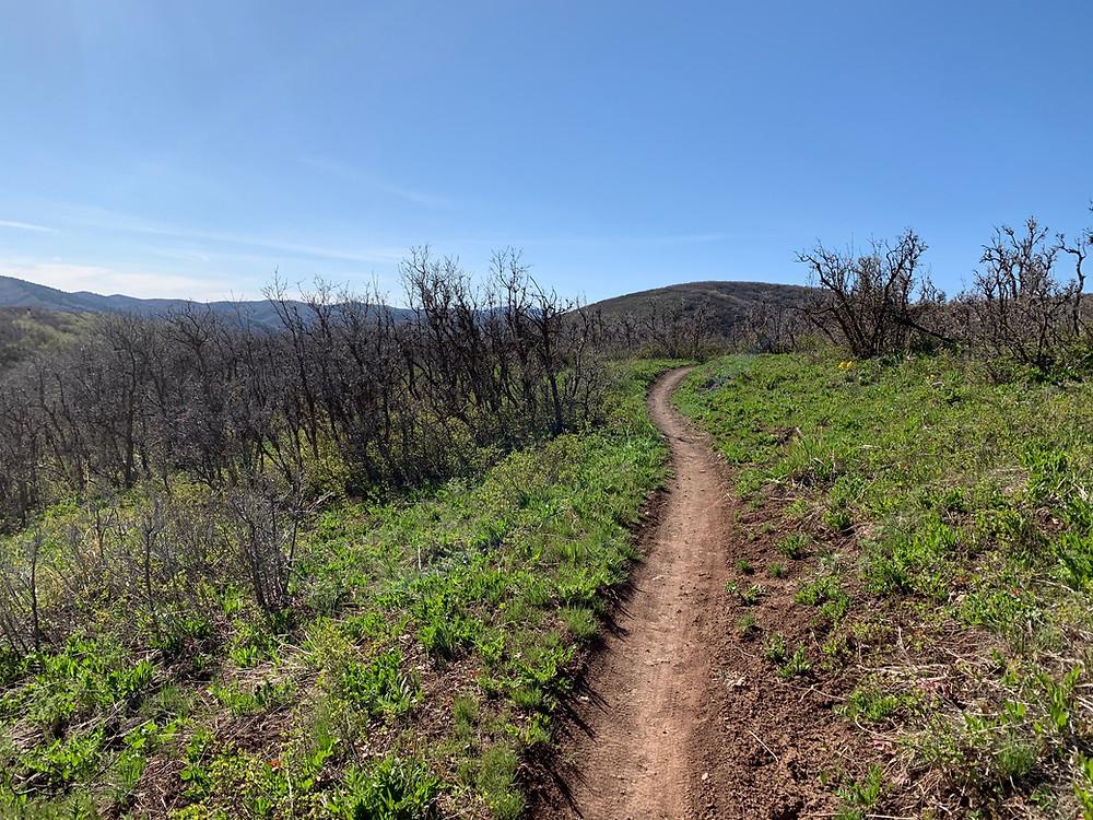 Jeremy Ranch hike