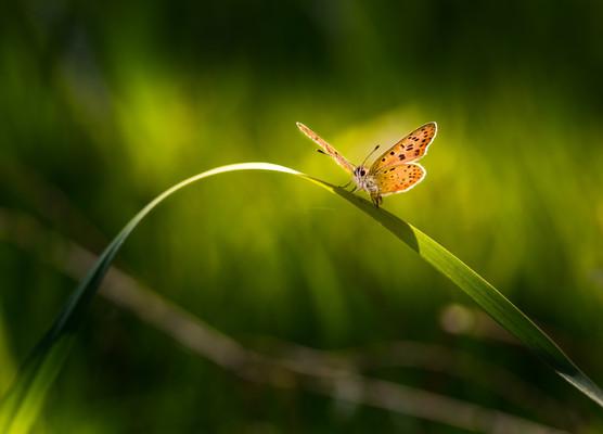 grass green backgrnd w yellow butterfly.jpg