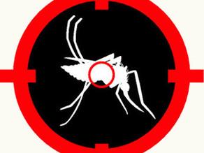 Biotecnologia: Avanço em transgênicos (Aedes aegypti)