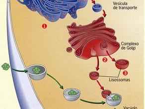 Digestão intracelular e extracelular