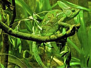 Defesa animal • Zoologia X Botânica