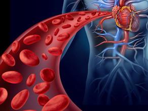 Sistema circulatório: conceitos iniciais