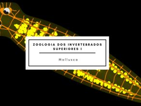 Zoologia dos Invertebrados Superiores II: Filo Annelida – Classe Polycheta