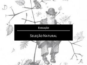 Evolução: Seleção Natural