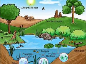 Fatores limitantes de um ecossistema