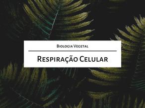 Estude para o mestrado comigo: Respiração celular ((com foco em vegetais))