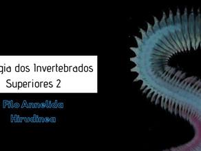 Zoologia dos Invertebrados Superiores II: Filo Annelida – Classe Hirudinea