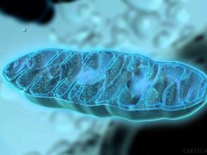 Teoria endossimbiótica