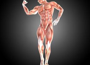 Fisiologia da locomoção: músculos