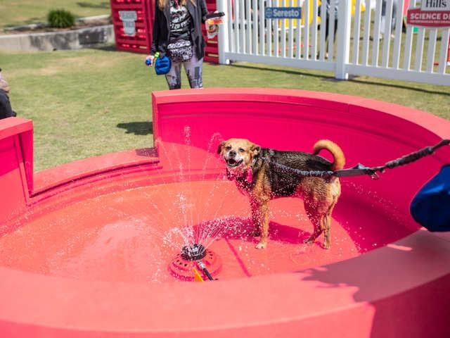 Pup Fest