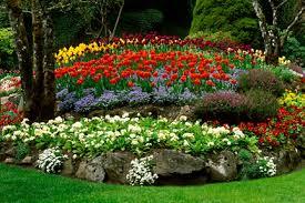 seasonal flowerin