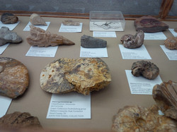 John Fox Fossil Collection