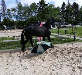 schriktraining paard
