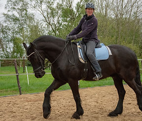 21 jarig paard
