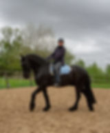 equine motion