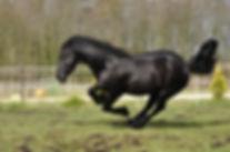 www.equine-motion.com