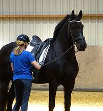 Rechtrichten EquineMotion