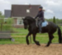 equine motion Virginia