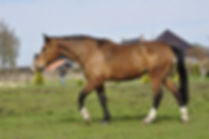 equine motion boegbeeld