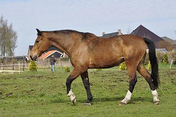 equine motion boegbeeld