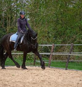 equine motion