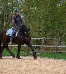Equine-Motion