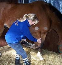 sportmassage paard Drenthe